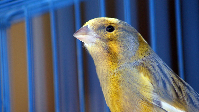 What does the canary signal?